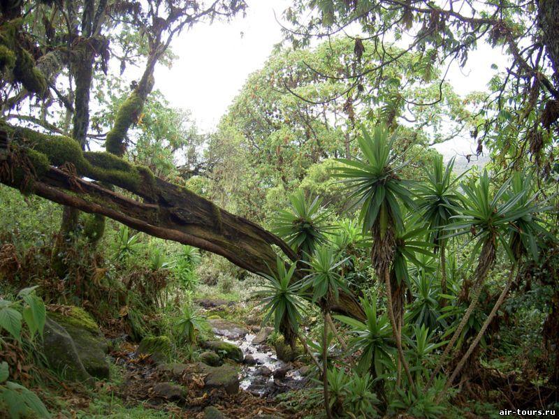 Леса кении